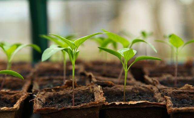 gardening essay