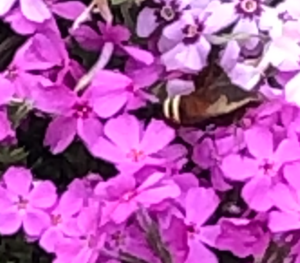 Picture of Moth